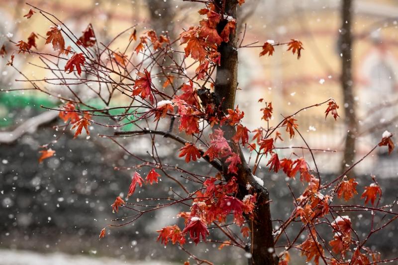 является погода катании в ноябре отзывы