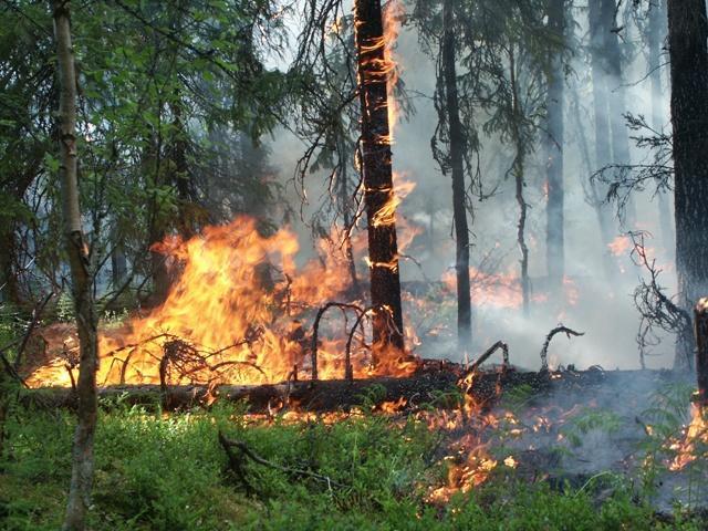 9 природных пожаров бушуют наЯмале