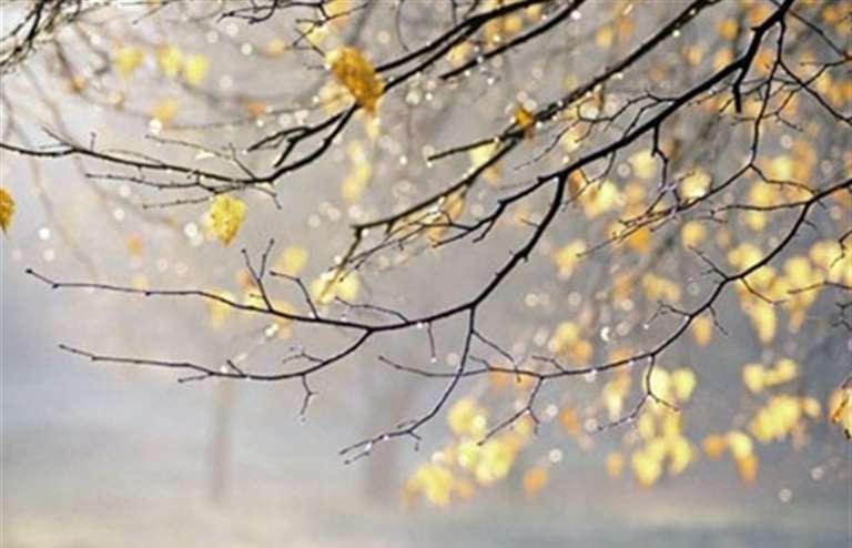 Вближайшие недели синоптики прогнозируют холодную погоду сдождями